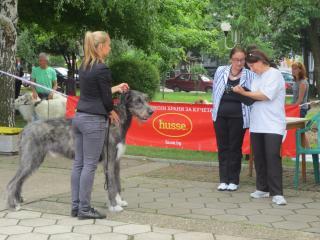 Husse България спонсор на специализираната изложба за Хрътки